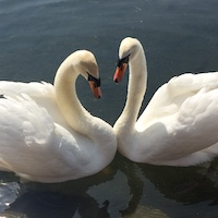 2019 england london hyde park