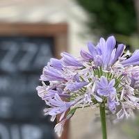 2019 france provence flower