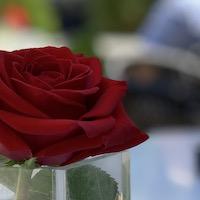 2019 romania bucharest rose